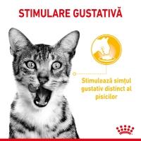 Royal Canin Sensory Taste, plic hrană umedă pisici, stimularea gustului (în sos), 85g
