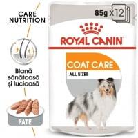 Royal Canin Coat Care Adult, bax hrană umedă câini, blană sănătoasă și lucioasă, (pate), 85g x 12