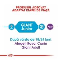 Royal Canin Giant Junior, 15 kg + 3 kg Gratis