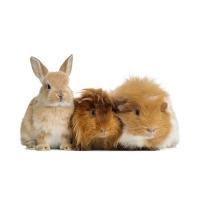 Vet's Best Sampon Spalare Uscata pentru Animale Mici, 150 ml