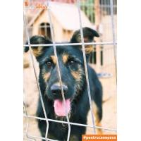 Doneaza 1 kg de hrana catre Asociatia Animal Shields Oradea