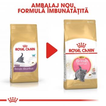 royal canin british shorthair kitten 2kg hrana pisici. Black Bedroom Furniture Sets. Home Design Ideas