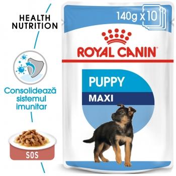 Royal Canin Maxi Puppy, bax hrană umedă câini junior, (în sos), 140g x 10