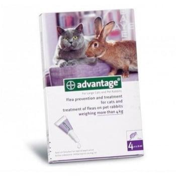 Advantage Pisica/Iepure 80, > 4 kg, 4 pipete