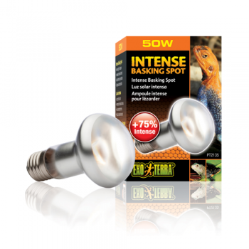 Bec Intense Basking Spot - PT 2135 50 W