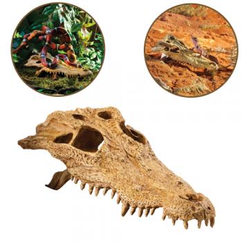 Decor Crocodile Skull