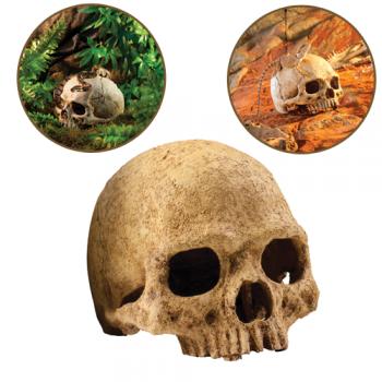 Decor Primate Skull