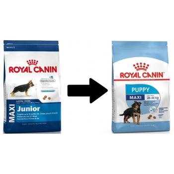 royal canin maxi junior 10 kg. Black Bedroom Furniture Sets. Home Design Ideas