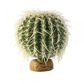 Barell Cactus Medium
