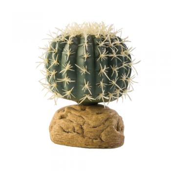 Barell Cactus Small