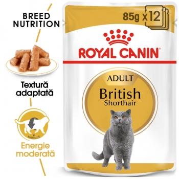 Royal Canin British Shorthair Adult, 85 g