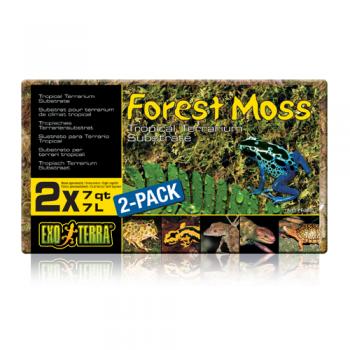 Forest Moss 500 g